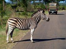 Zebraüberfahrt Lizenzfreie Stockfotografie