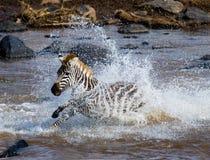 Zebraüberfahrt ein Fluss kenia tanzania Chiang Mai serengeti Maasai Mara Stockfotografie