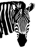 Zebra royalty free illustration