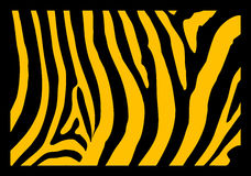 Zebra. A close up of zebra skin shown with a black frame and yellow and black in the skin area Royalty Free Stock Photo