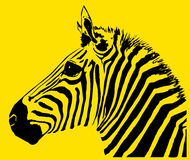 Zebra. An image of a zebra with black and yellow in the skin and background areas Royalty Free Stock Photography