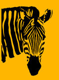 Zebra. An image of a zebra with black and orange in the skin and background areas Royalty Free Stock Photography