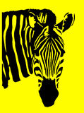 Zebra. An image of a zebra with black and yellow in the skin and background areas Stock Image