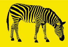 Zebra. An hand drawn image of a zebra with it's head down as if it's feeding. Image done in the style of a lino cut on a yellow background Royalty Free Stock Photo
