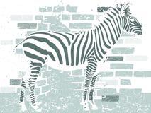 Zebra Stock Photo