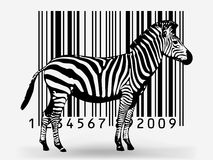 Free Zebra Royalty Free Stock Photo - 11335285