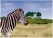 Zebra illustrazione di stock