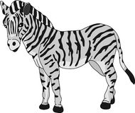 Zebra Foto de Stock Royalty Free