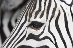 Zebra. Eye in National Badoka Park Stock Photography