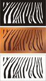 Zebra. Set from three color of zebra background Royalty Free Stock Photo