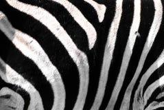 Zebra. Pattern of zebras fur stripes Royalty Free Stock Image