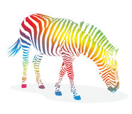 Zebra2406a illustrazione di stock