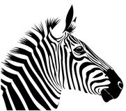 Zebra. Vector illustration of zebra head Royalty Free Stock Photos