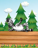 A zebra above the wooden signboard Stock Photography