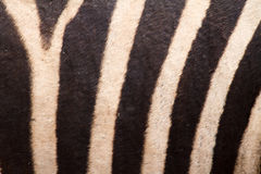 Zebra abstract lines pattern Stock Photo
