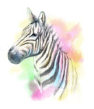 Zebra abstract portrait  colored Royalty Free Stock Image