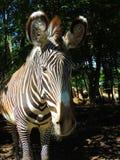 Zebra all'aperto Fotografie Stock