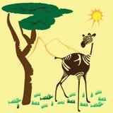 Zebra allegra in savana Immagine Stock