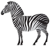 Zebra, animal africano dentro   Ilustração Stock