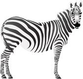 Zebra Animal Icon and Vector Illustration. For any purpose such as cover and illustration book, website, social media, blog, stationary, print stuff, poster vector illustration