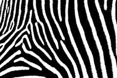Zebra Art. The artful side of a zebra, close up royalty free illustration