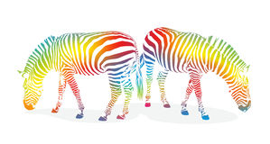 Zebra1207b illustrazione di stock