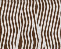 Zebra baby short fur. Textured background royalty free illustration