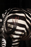 Zebra back Royalty Free Stock Photo