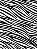 Zebra background Royalty Free Stock Image