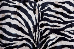 Zebra background Royalty Free Stock Photos