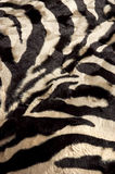 Zebra background Stock Photography