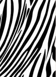 Zebra background. Zebra abstract background. Vector, black and white stripes. Digital illustration. For art, print, fashion, textile, web design stock illustration