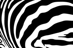 Zebra vector background Stock Images