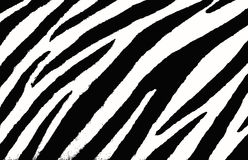 Zebra background Stock Photos