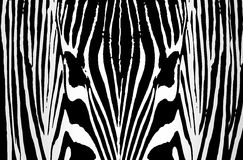 Zebra background. Seamless repeat, of a an animal skin zebra Royalty Free Stock Images