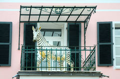 Zebra on balcony Royalty Free Stock Photos