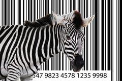 Zebra barcode Stock Photo