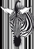 Zebra barcode Face and neck Royalty Free Stock Images
