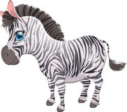 The zebra Royalty Free Stock Photography