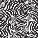 Zebra bezszwowy wzór ilustracja wektor