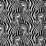 Zebra bezszwowy wzór Obraz Royalty Free
