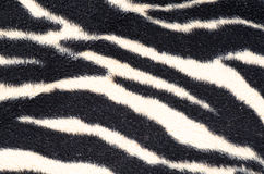 Zebra blanket Stock Photography