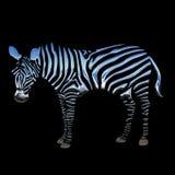 Zebra blu elegante del cromo 3D Fotografie Stock Libere da Diritti