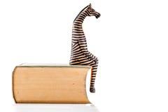 Zebra on book Royalty Free Stock Photo