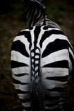 Zebra butt Royalty Free Stock Photo