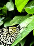Zebra Butterfly, Denver, Colorado, Springtime stock photos