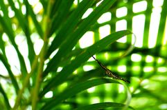 Zebra butterfly on green leaf Royalty Free Stock Images