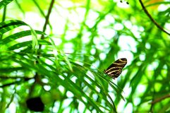 Zebra butterfly on long leaf plant in aviary Stock Photos