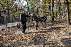 Zebra in cage at ZOO Bor Serbia 01. Worker in ZOO Bor with zebra Royalty Free Stock Images