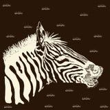 Zebra card Royalty Free Stock Photography